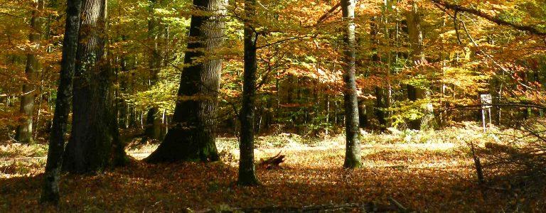 forêt domaniale de Saint-Sauvant